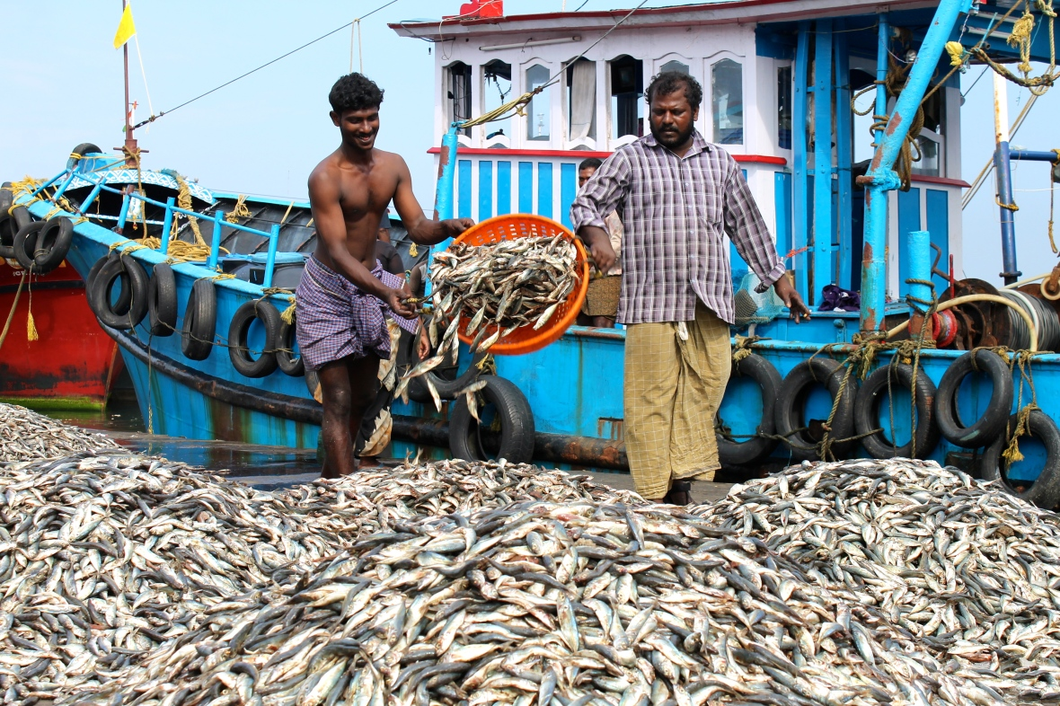 Men transfer fish from boats to market at Neendakara fishing harbour © Nisha D'Souza