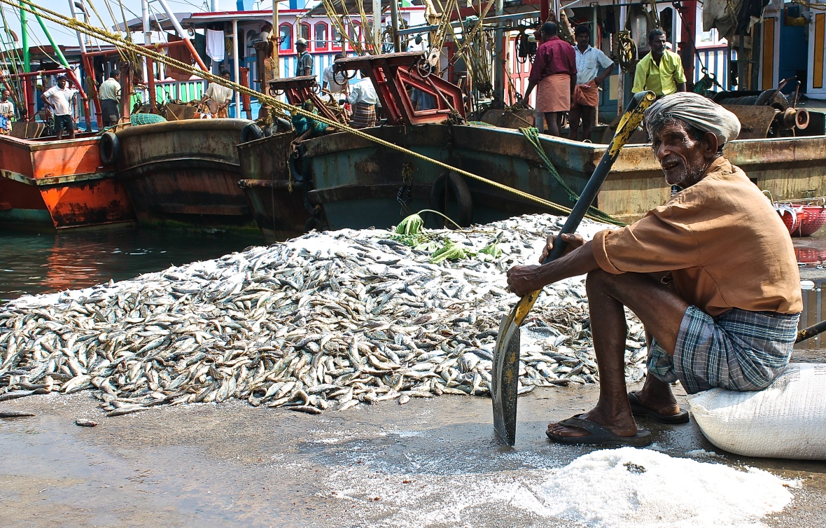 An old man takes a break from tossing salt onto incoming catch to keep it fresh, at Neendakara fishing harbour © Nisha D'Souza