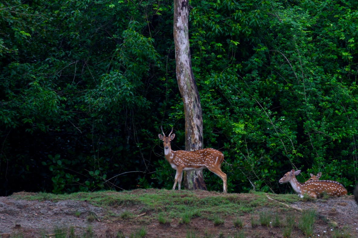 We spotted ample tiger prey, but none of the predators themselves © Nisha D'Souza