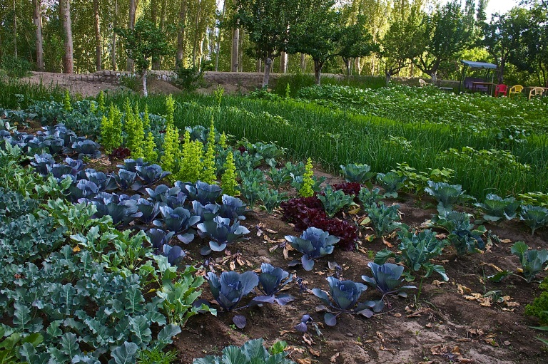 The beautiful vegetable garden at Snow View Lodge, where we stayed in Leh © Nisha D'Souza